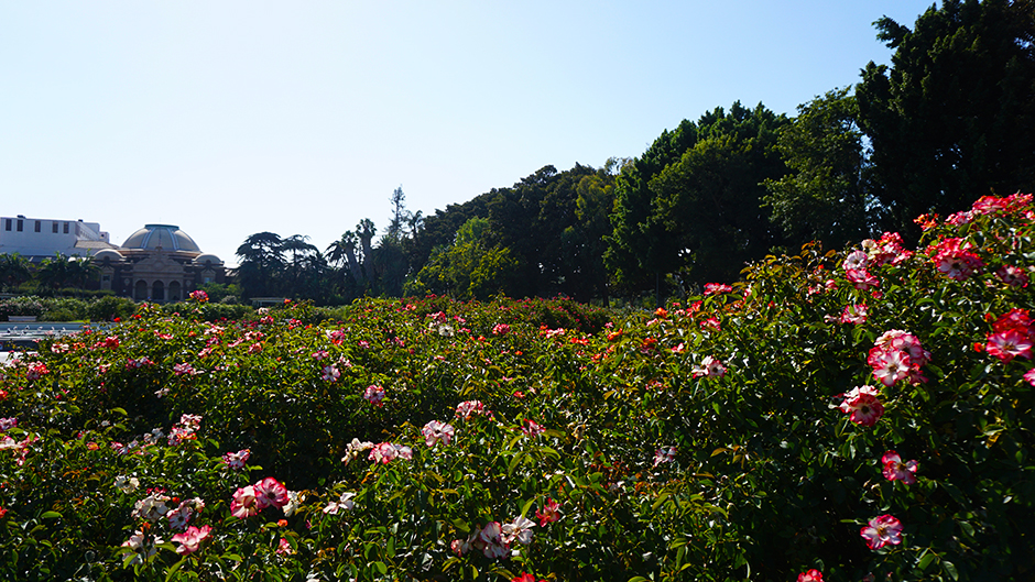 Rose Garden Scenery